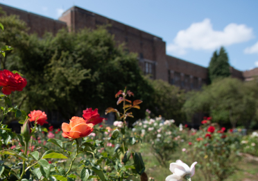 Rose Garden in front of Bagley Hall
