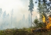 Crews from Washington Department of Fish and Wildlife, headed by Matt Eberlein, work on a prescribed burn of underbrush on state land in North Eastern Washington.